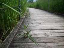 Boardwalk Through The Wetland Stock Image