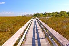 Boardwalk Through a Wetland Marsh. Boardwalk Through a Wetland in the Everglades Stock Images
