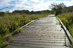 Boardwalk in the Wetland. During summer Stock Photo