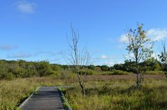 Boardwalk in the Wetland Royalty Free Stock Images