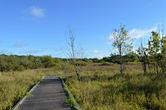 Boardwalk in the Wetland Royalty Free Stock Photo