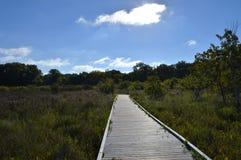 Boardwalk in the Wetland Stock Photo