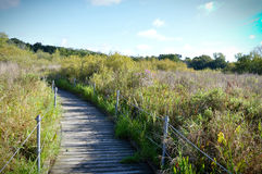Boardwalk in the Wetland Royalty Free Stock Photography