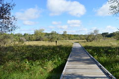 Boardwalk in the Wetland. During summer Stock Photos