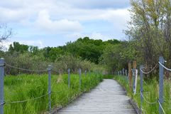Boardwalk in the Wetland Royalty Free Stock Image