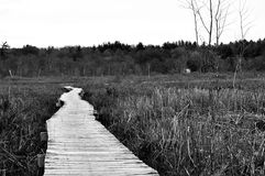 Boardwalk through wetland Royalty Free Stock Photo