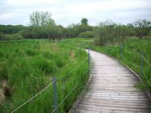 Boardwalk Through The Wetland Royalty Free Stock Images