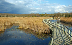 Boardwalk through Wetlands Royalty Free Stock Photography