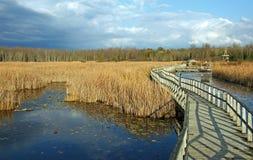 Boardwalk through Wetlands. Boardwalk in Wye Marsh, a wildlife habitat in central Ontario Royalty Free Stock Photography