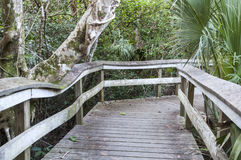 Boardwalk through the wetlands of Everglades Stock Photos