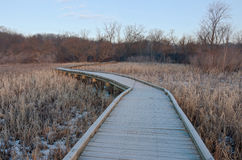 Boardwalk Wetlands and Forest at Refuge Stock Photos