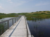 Boardwalk, Wetlands, and Sand Dunes. A wooden boardwalk passes over wetlands near sand dunes in Greenwich National Park in Prince Edward Island, Canada Royalty Free Stock Photos