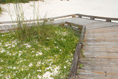 Boardwalk on white sand beach. Wooden boardwalk to white sand beach protecting dune grass in Panama City Florida USA Royalty Free Stock Photo