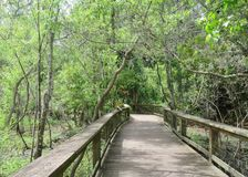 Free Boardwalk Winding Through Marsh Land With Cypress Trees Growing Stock Photos - 102607813