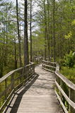 Boardwalk winds through Nature preserve Stock Photo