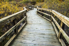 Boardwalk Winds Through A Wetlands Habitat Royalty Free Stock Photo