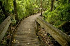 boardwalk wooden Royaltyfri Bild