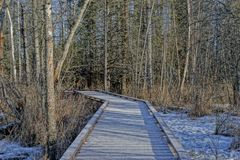 Boardwalk in the woods Royalty Free Stock Image