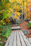 Boardwalk in the Woods on a Colorful Fall Day Royalty Free Stock Photo