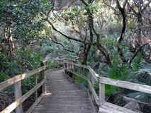 Boardwalk in the Woods. Maritime hammock nature trail, early morning at Lori Wilson Park in Cocoa Beach, Florida, part of the Great Florida Birding Trail Stock Photos