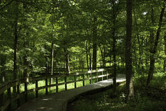 Boardwalk in the Woods Royalty Free Stock Images