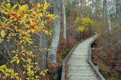 A boardwalk in the woods Stock Images