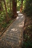 boardwalkrainforest igenom arkivfoton