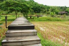 Boardwalks in rice field Stock Image