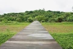 Boardwalks in rice field Stock Photos