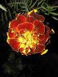 Boas imagens, dos naturs naturais biuty Imagens de Stock Royalty Free