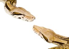 Boas Meeting Stock Image