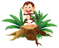 A boastful monkey above the trunk Royalty Free Stock Photo