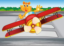 A boastful tiger riding a plane Stock Photo
