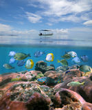 Boat alone above a coral reef with shoal of fish royalty free stock images