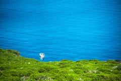 Boat alone in the sea in Porto Conte bay Stock Image