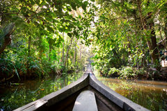 Boat in backwaters jungle Royalty Free Stock Image