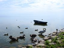 Boat and birds on lake shore, Lithuania royalty free stock image