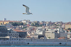 Boat on the Bosporus Stock Image