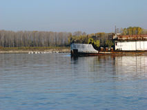 The boat that brings autumn. Pelican colony in North Island Talchia and an old commercial boat that brings fall on the Danube royalty free stock photos