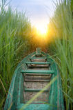 Boat in a cane. Stock Photos