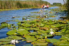 Boat on a channel of Danube Delta Stock Photos