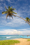 Boat and coconut palm tree Royalty Free Stock Image