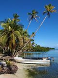 Boat and coconut trees Royalty Free Stock Images