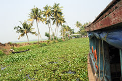 Boat cruising on a canal of the backwaters near Alleppey Stock Photos