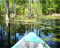Boat on cypress swamp gardens North Carolina Royalty Free Stock Photo