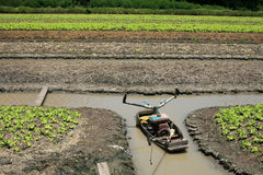 Boat on the ditch in Lettuce farm Royalty Free Stock Photos