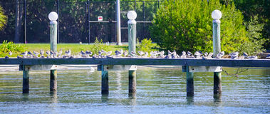 Boat dock and bird Royalty Free Stock Photography