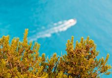 Boat driving fast behind trees on the shore Stock Images