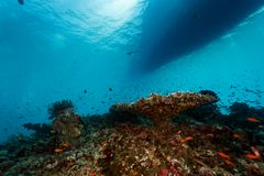 Boat floating over coral reef seen from water below. Boat floating over coral reefseen from below Stock Photos
