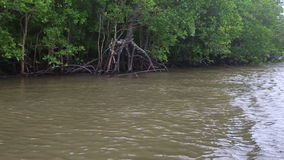 Boat floats on the river of mangroves. Thai boat floats on the muddy river of mangroves on a cloudy day stock footage